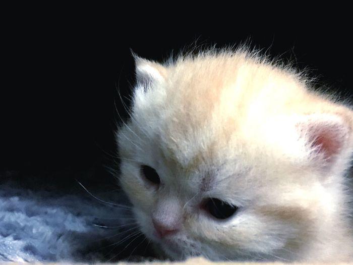 Babycat Animal