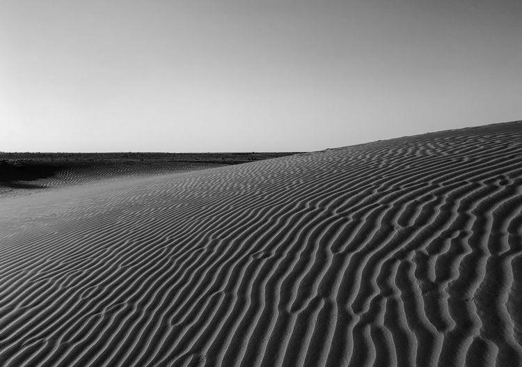 Desert India Sheepherd Travel Arid Climate Beauty In Nature Camel Day Desert Horizon Over Land Jaisalmer Landscape Nature No People Obrigado Outdoors Pattern Rajasthan Sand Sand Dune Scenics Sheep Sky Sunset Thar Desert