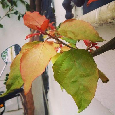 Autumn Leaf Tunisia Igertunisia أوراق الخريف ... يبقى جمالها !! :)