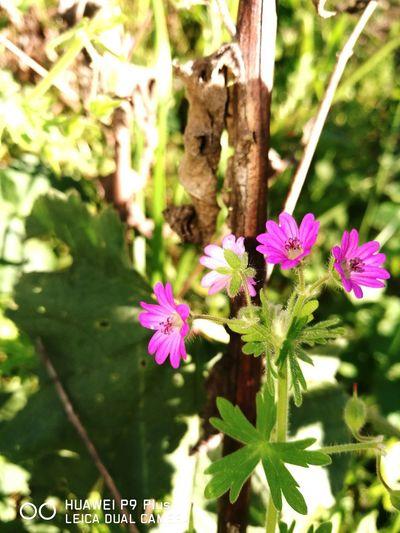 Fragility Flower Nature