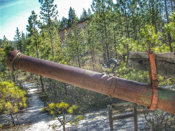 Murphy doing his best Tank Girl impression. Abandoned State Park  Malokoff Diggins Hydraulic Goldmining California Trees Cat Watching