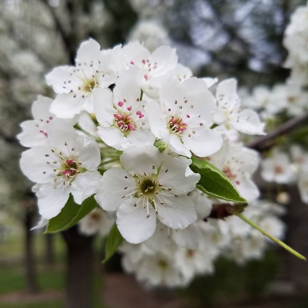 Flower Blossom Nature Beauty In Nature Close-up Flower Head Freshness