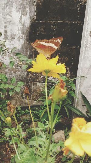 MariposaMonarca Yelow Flowers