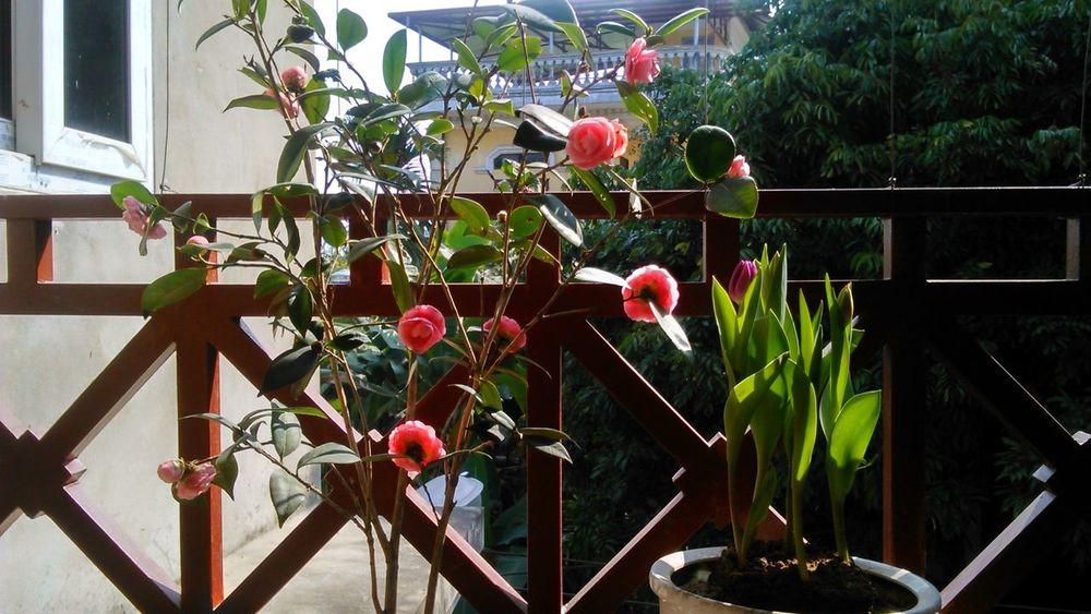 Beautiful flowers Flower Flowers Nature Photography Nature Beautiful Flowers Beautiful Flower Flower Collection Flower Hiendat Eyeem Collection