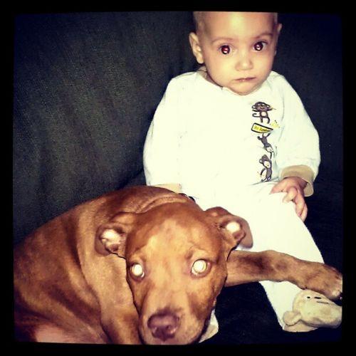 Bestfriends Pitbull Puppy Jackjr