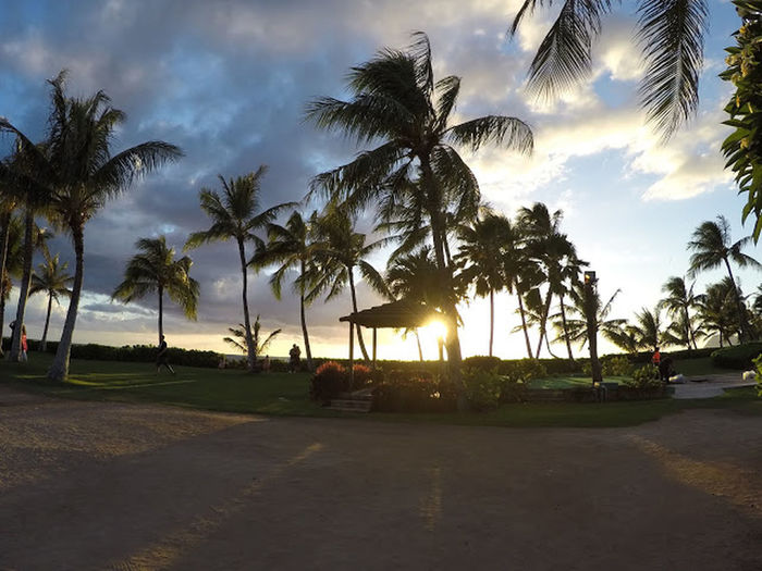 Palm Tree Travel Sunset Hawaii Paradise Paradisecove Outdoors Travel Destinations Sky Beauty In Nature Nature