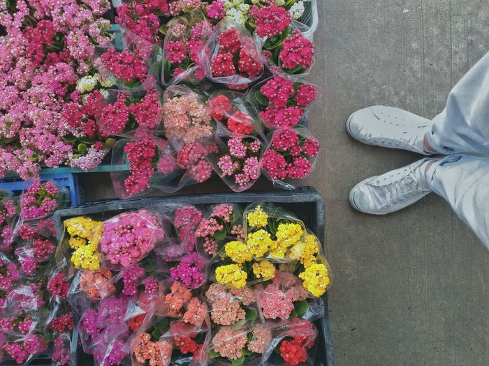 Multi colored flowers