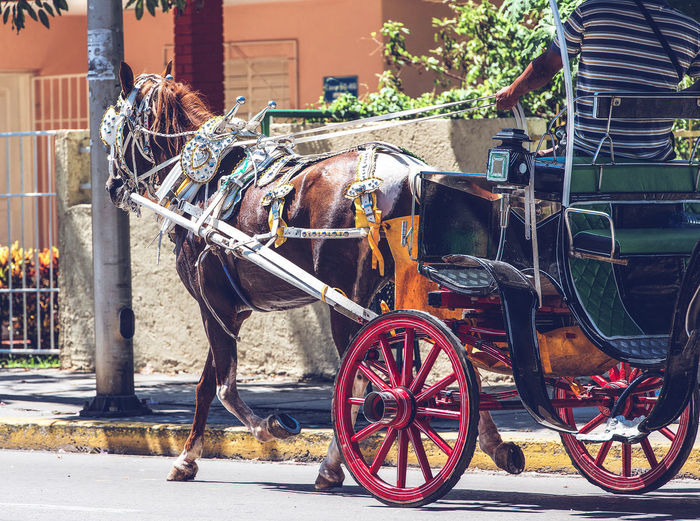 Horse-drawn carriage on a street in Varadero Cuba American Antique City Classic Cuba Havana Holiday Road Transport Transportation Travel Varadero Agency Colorful Concept Historic Horse-drawn Nostalgia Old Retro Styled Street Tourism Traditional Tropical Urban