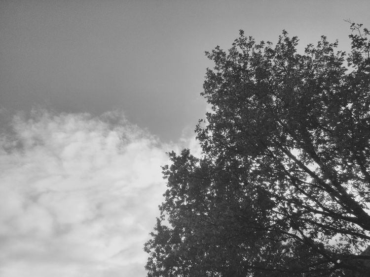 simple Tree Sky Low Angle View Nature No People Day Growth Outdoors Blue Beauty In Nature Branch Freshness Simplicity Simple Things In Life Black & White Blackandwhite Black And White Silhouette