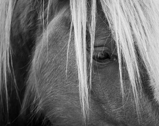 Pony 2 Horses Walking Around Pony Black & White
