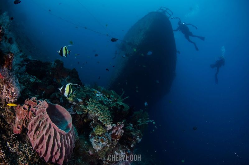 Kubu wreck Bali. Underwater UnderSea Sea Sea Life Coral Animal Themes Swimming Nature Fish Water Adventure Animals In The Wild Animal Wildlife Beauty In Nature Scuba Diving One Person Day Bali First Eyeem Photo