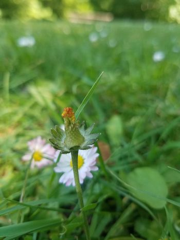 Insect Animal Wildlife One Animal Animals In The Wild Nature Green Color Animal Themes Outdoors Day Plant No People Focus On Foreground Close-up Leaf Flower Beauty In Nature Grass Damselfly Full Length Fragility
