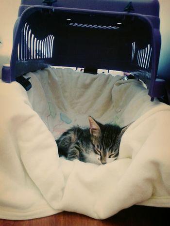 Baby Cat♡