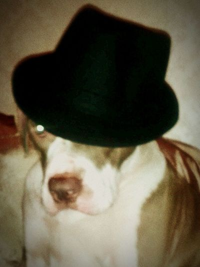 Gangsters Paradise Wolverhampton Gangsta GangsterDog DOGPOUND Snoopdogg lokie looking gangsta