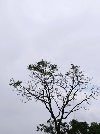 Colour Of Life Taking Photos Enjoying Life Freelance Life Just A Click😉 Without Flash Showing Perfection BHOPAL INDIA Nature Photography Colours Of Sky Pure Beauty Eyem Best Shots Sky And Trees Branches And Sky