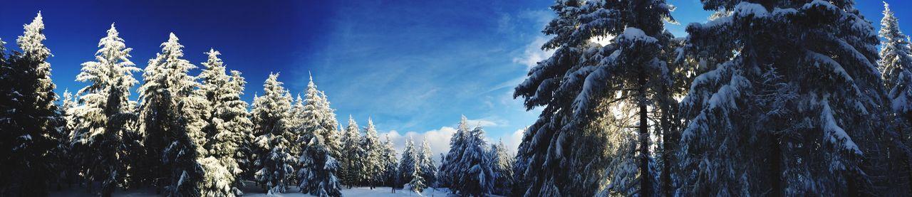Panorama Nature EyeEm Nature Lover Tadaa Community Winter Snow