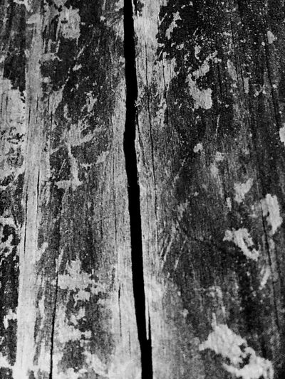 Eternal split... Split, Wood, Grain, B/w, Eternal, Outside, Nature,