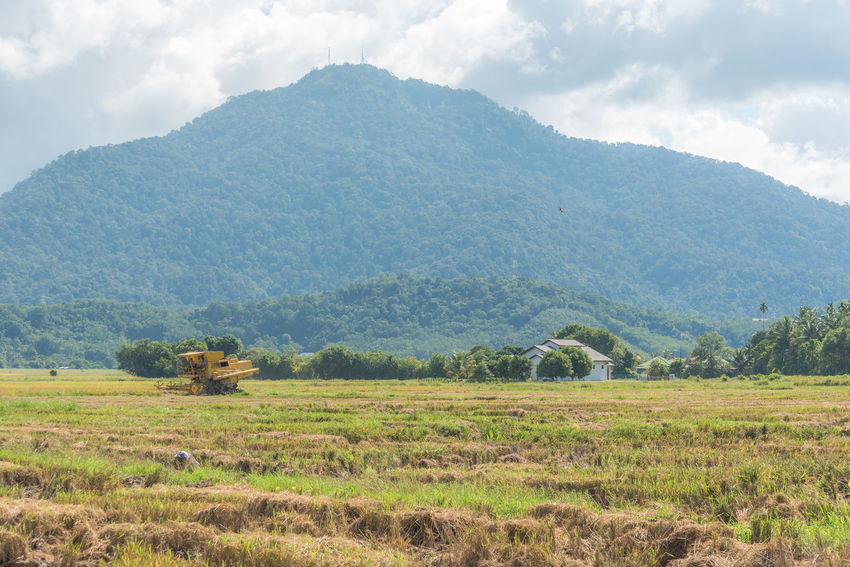 Harvester harvesting paddy. Agriculture Beauty In Nature Day Farm Field Green Color Harvesting House Landscape Machine Mountain Nature No People Outdoors Paddy Paddy Field Rice Rice Field Rice Paddy Rural Scene Scenics Tranquil Scene Tranquility Tree