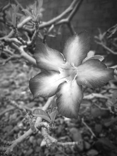 Flower Petal Fragility Nature Flower Head Beauty In Nature Growth Black And White Blackandwhite Photography Outdoors Close-up Freshness Day No People The Week On EyeEm EyeEmNewHere
