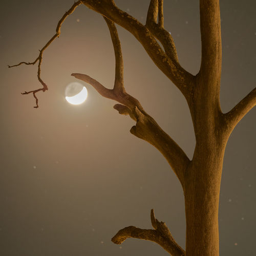 Waning Crescent Moon Rise and dead tree illuminated by surrounding light pollution from street lamps. This was taken around 3AM on 17th Aug 2017 with a 200mm lens Crescent Moon Dead Tree Light Pollution Moon Beauty In Nature Branch Close-up Nature No People Outdoors Tree