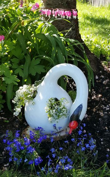 Swan Gourd Close-up Day Diy Project Flower Flower Head Green Color Growth Nature No People Outdoors Plant Springtime Swan Gourd