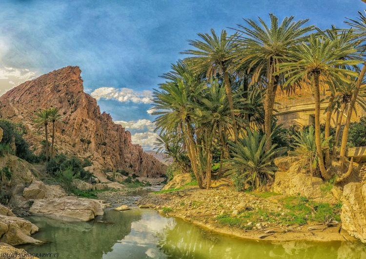 El Kantara Wailshow Algeria Enjoying Life Nature