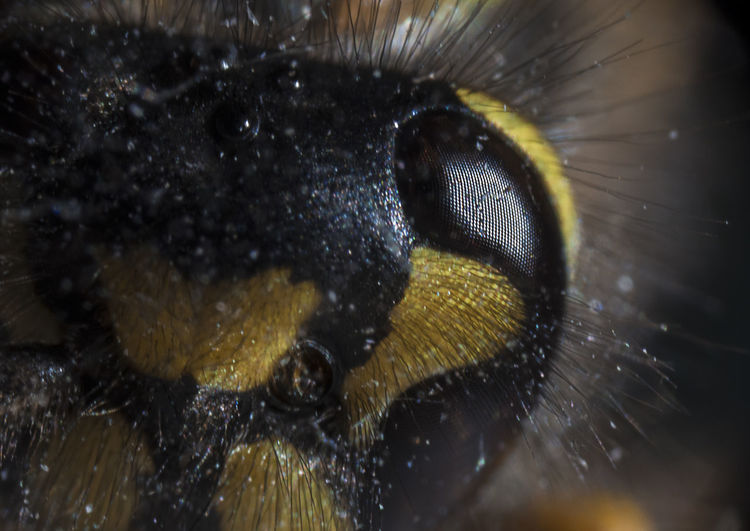Wasp Eye Animal Themes Animals In The Wild Close-up Day Fragility Insect Maximum Closeness Nature No People One Animal Outdoors Reverse Coupler Wasp Water