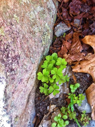 Everything's coming up clover... Hiking Nature_collection Happy St. Patricks Day