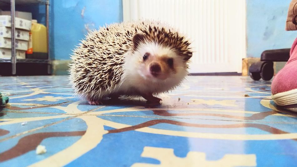 Animal Themes No People One Animal Animal Wildlife Animals In The Wild Outdoors Mammal Hedgehog Day