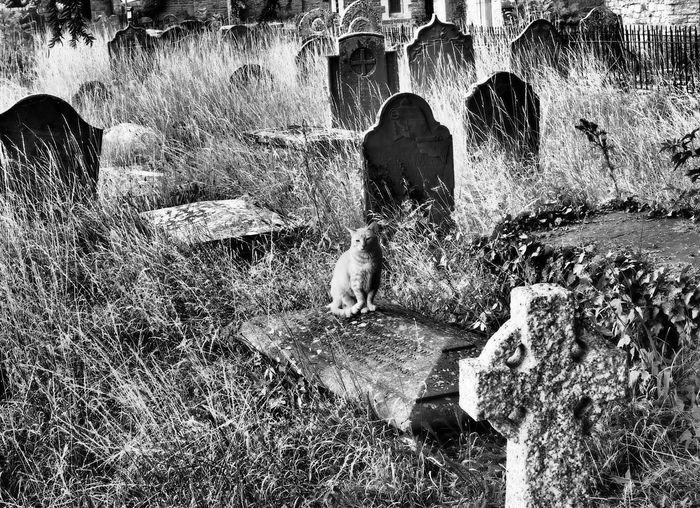 Cat in old cemetery