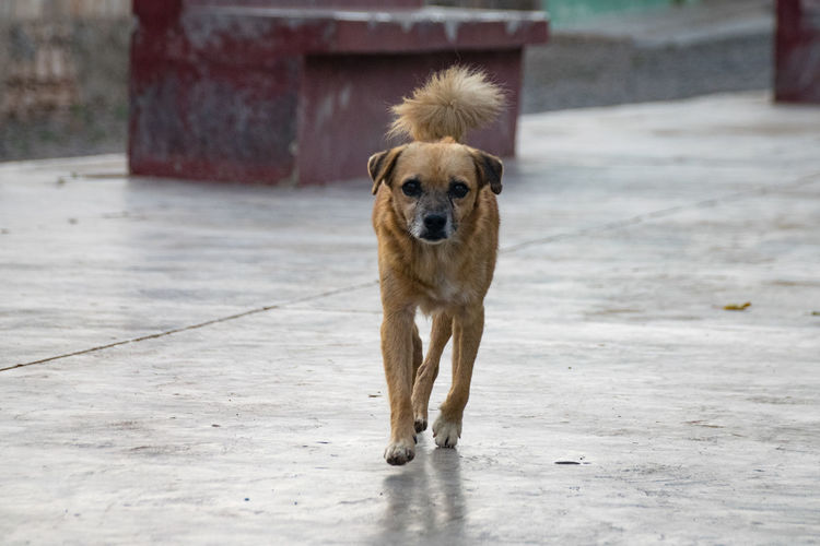 Stray mongrel dog Dogs Homeless Dogs Mongrel Stray Dog Animal Themes Architecture Built Structure Day Dog Domestic Animals Mammal Mongrel Dog No People One Animal Outdoors Pets Portrait Stray Animal Street Photography Town