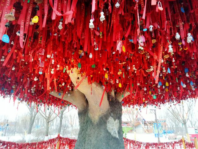 Wish Tree , hope this year is a new beginning Wish Tree Wishing Hope.✌ Real People One Woman Only
