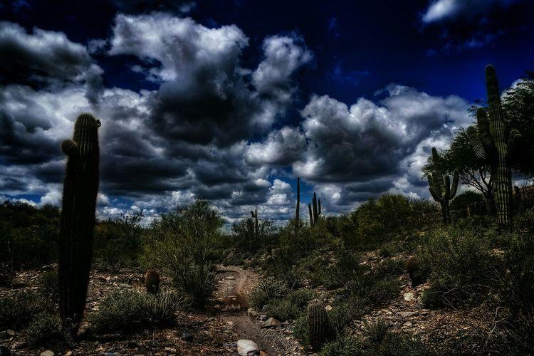 Desert stuff Desert Beauty Cloudporn EyeEm Nature Lover OpenEdit Tooearlyforthisshit