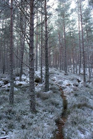 Shades Of Winter Cairngorms National Park Loch An Eilein Scotland Beauty In Nature Day Forest Growth Landscape Nature No People Outdoors Scenics Sky Snow Tranquil Scene Tranquility Tree Tree Trunk Winter