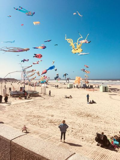 Kite festival. Berck Plage Kite Festival Kite Childhood Motion Beach Land Sand Sky Flying Nature Sea Beach Land Sand Sky Flying Nature Sea Real People Water Group Of People Large Group Of Animals Day Men Crowd Vacations