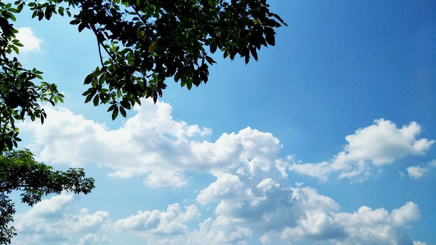 Tree Cloud - Sky Sky Nature Day Outdoors Spirituality Beauty In Nature No People Blue Cloud Formations Cloud_collection  Clouds And Sky Cloud Computing Cloud Sky And Tree
