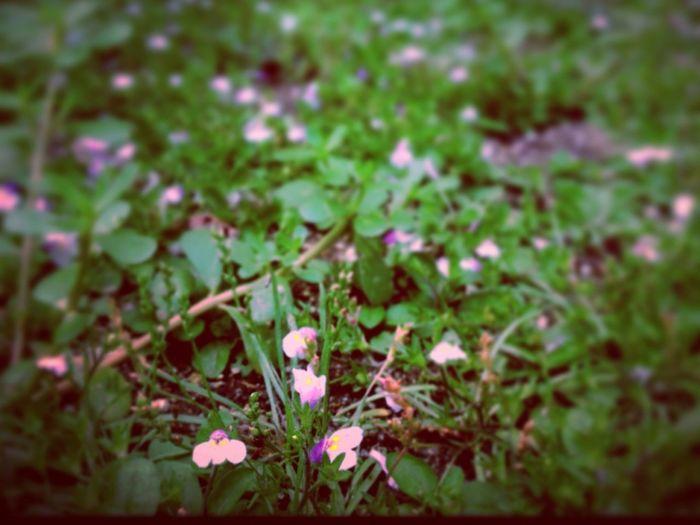 玄関前にて 花 雑草 緑 Flower Weed Gleen First Eyeem Photo