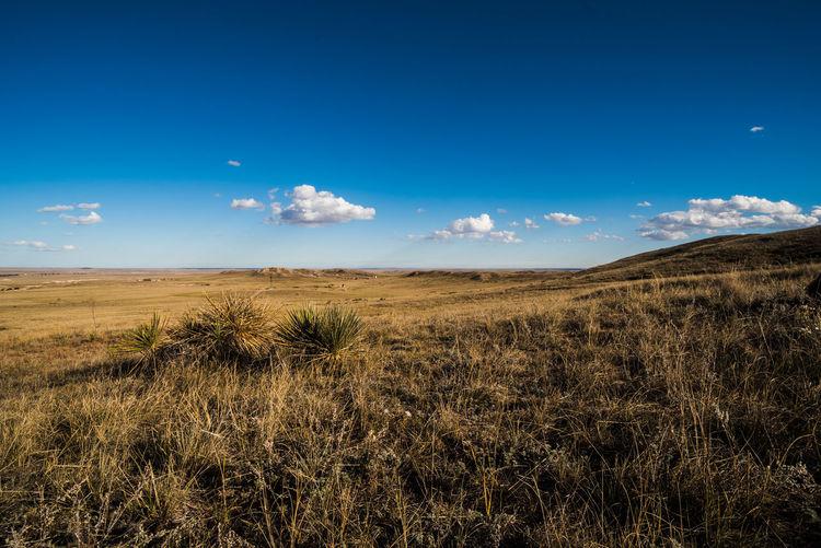 Grasslands in