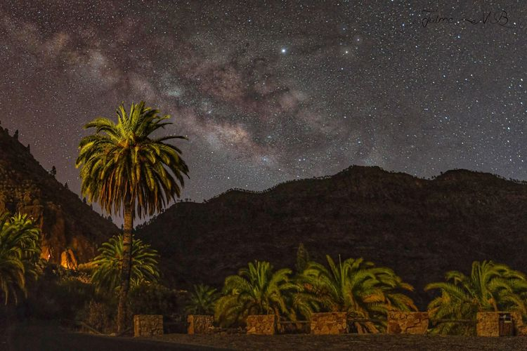 Scenic view of palm trees against sky at night