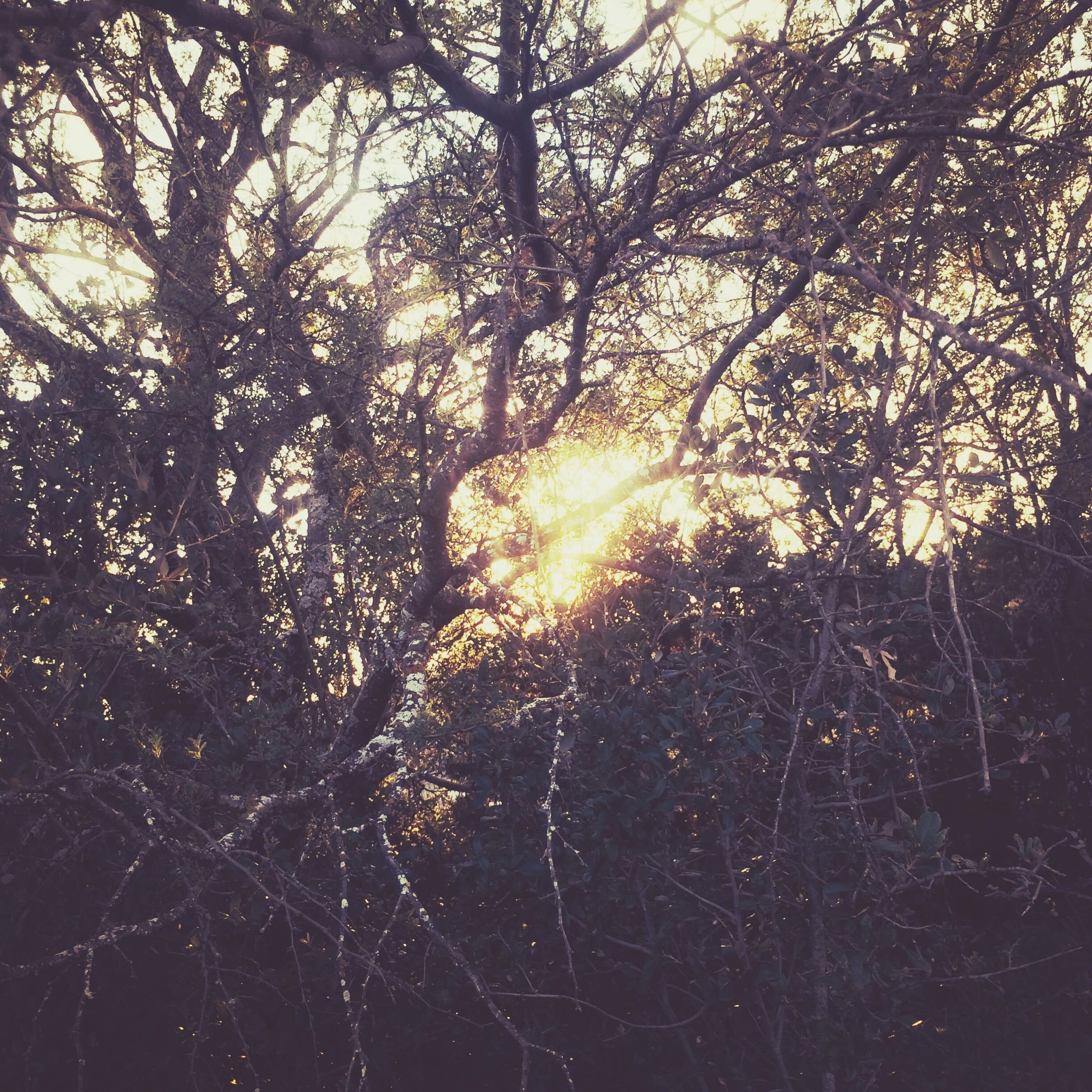 tree, sun, tranquility, sunlight, nature, branch, silhouette, beauty in nature, sunset, growth, sunbeam, tranquil scene, scenics, forest, low angle view, back lit, outdoors, lens flare, no people, sky