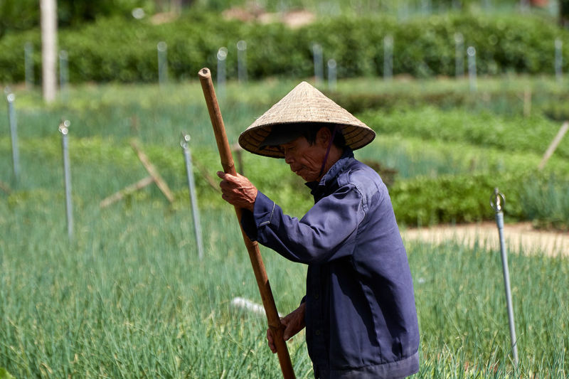 Farm Gardening Growing Hoian  Vietnam Adult Asian Style Conical Hat Conical Hat Day Field Holding Lifestyles Nature One Person Outdoors People Real People Vegetable