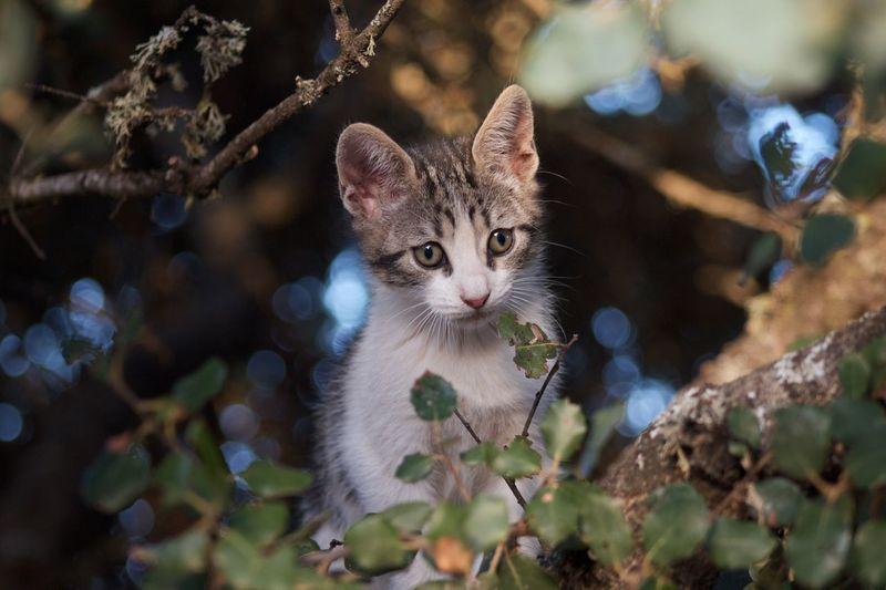 Close-Up Portrait Of Cat On Tree