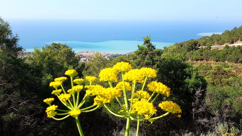 Flower Head Flower Yellow Sunflower Sea UnderSea Sky Close-up Plant