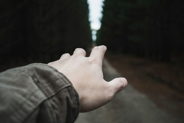 Hiker's hand pointing at forest