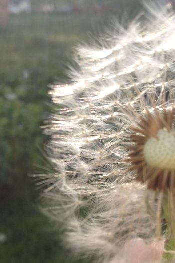 EyeEm Best Edits EyeEm Geography Eye4photography  Nice Berries First Eyeem Photo EyeEm Best Shots EyeEm Gallery Eye Em Nature Lover EyeEm Nature Lover