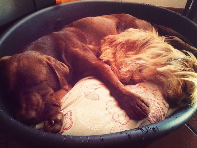 Bestfriends <3 I Love My Dog Bubi Nanne E Coccole