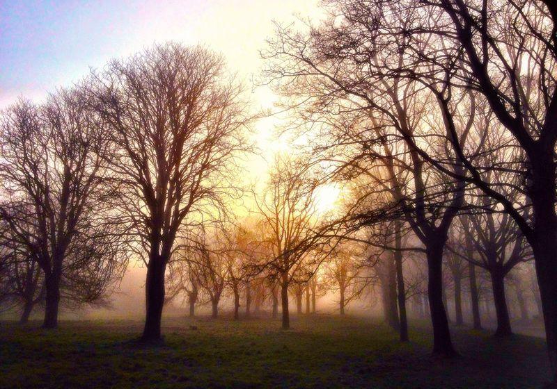 Trees Fog Sunrise Eyem Misty Day