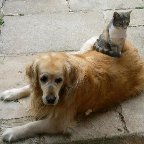 Animals Cats Dogs Amis