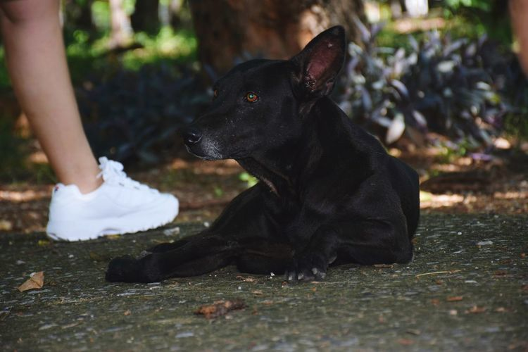 Low section of black dog sitting outdoors