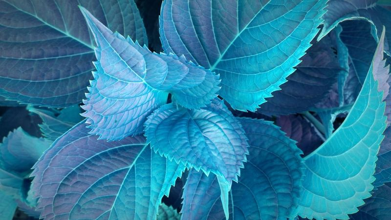 EyeEm Vison Science Leaf No People Close-up Multi Colored Full Frame Flowers, Nature And Beauty Backgrounds EyeEm Selects Eye4photography  Exceptional Photographs Details Of Nature EyeEm Masterclass Nature Plant Nature Textures EyeEm Nature Collection Full Length Leaves Blue Different My Unique Style Like Fantasy Growth EyeEmNewHere AI Now
